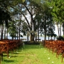 Wedding ceremony area set up on the lawn of the Coastal Arts Center of Orange Beach with Wolf Bay as a backdrop