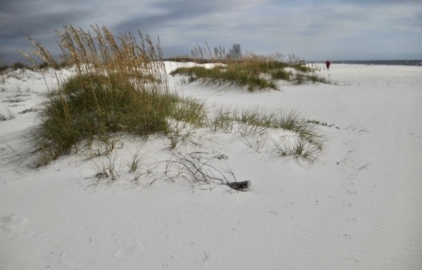 How to recycle your live Christmas tree in Orange Beach and help dune restoration