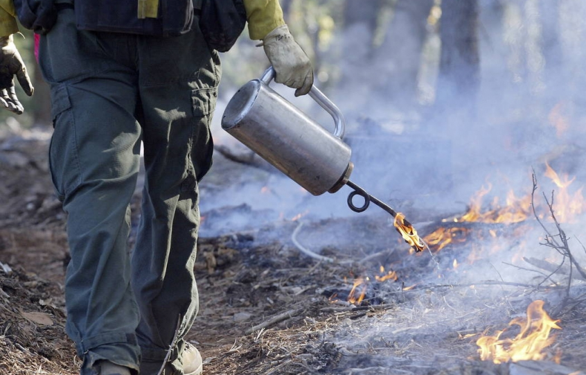 Prescribed Burn planned for sections of Gulf State Park Campground between Oct. 1 and Oct. 4