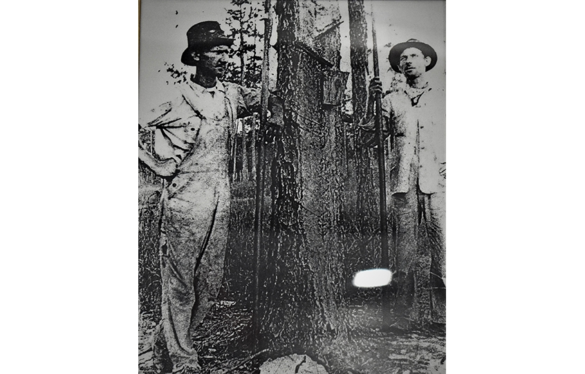 Turpentine harvesters pose with a Baldwin County pine