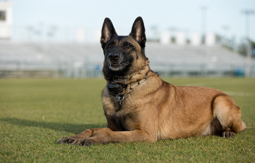 Orange Beach Police K9 Axle