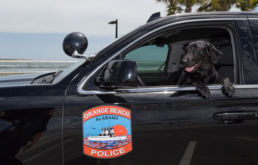 Orange Beach Police K9 Sadie