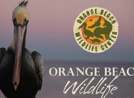 Orange Beach Wildlife calendar photo contest