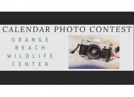 Graphic announcing Orange Beach Wildlife Center Calendar Photo Contest