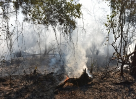 Prescribed burn shown on December 31, 2019 at Gulf State Park